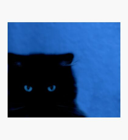 kitty at night Photographic Print