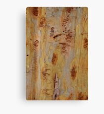 Scribbly Gum 4 Canvas Print