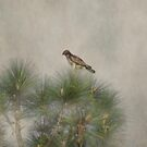 Hawk in the Treetop by designingjudy