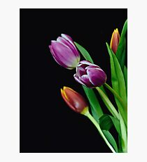 Spring Blooms Photographic Print
