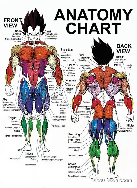 Muscle Chart Peopledavidjoel