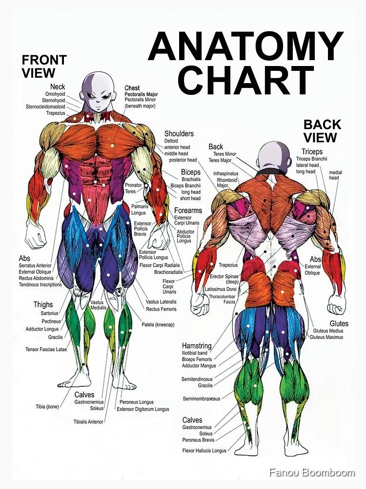 Encantador Pecho Diagrama De La Anatomía Muscular Inspiración ...