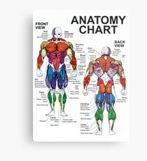 Anatomy Chart - Muscle Diagram Metal Print
