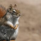 Proud squirrel by Sean McConnery
