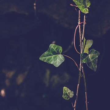 Ivy by LFimM3