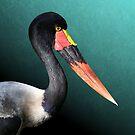 Saddle-Billed Stork Portrait by DebiDalio