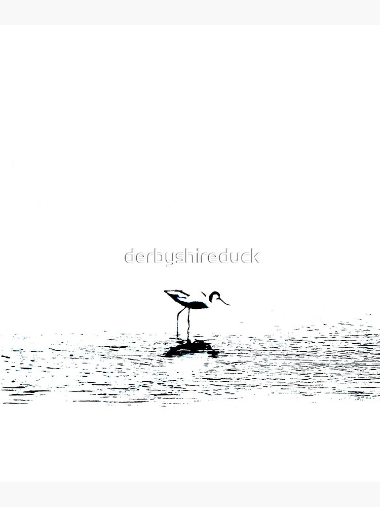 Stylized Avocet - Waterbird collection by derbyshireduck