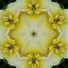 White Floral Mandala by DesJardins