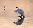 Slippery Landing by Nigel Bangert