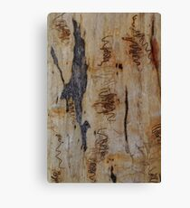 Scribbly Gum 6 Canvas Print