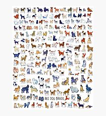 Every AKC Dog Breed Photographic Print