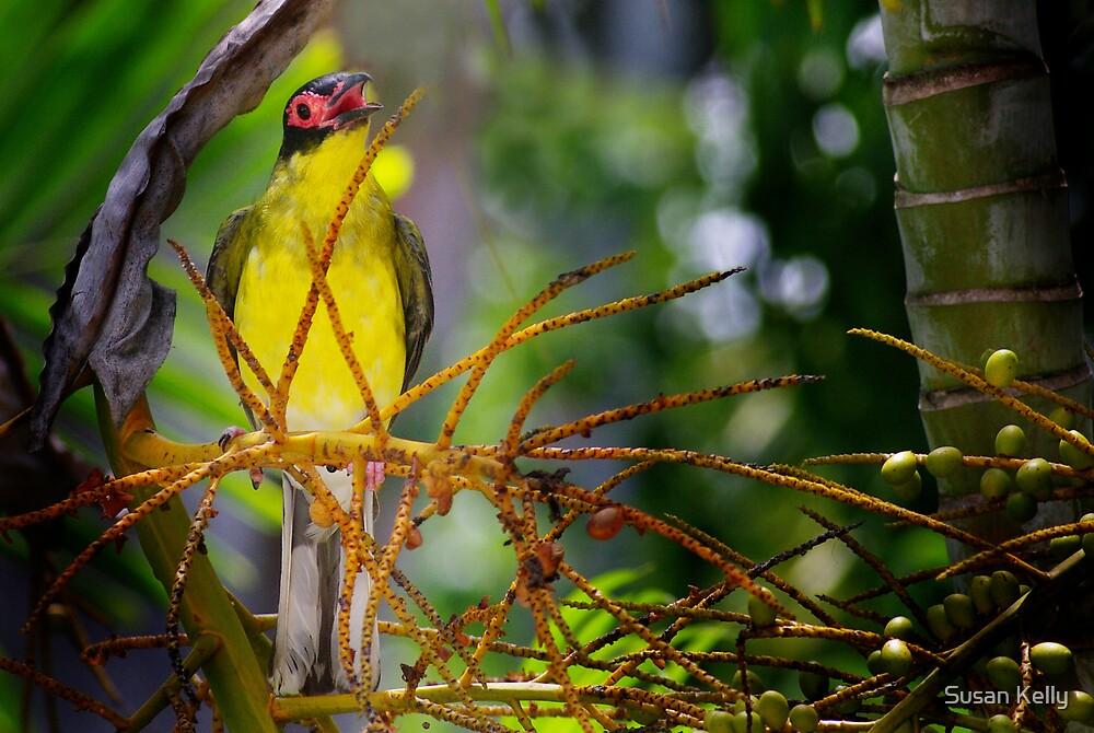singing bird by Susan Kelly
