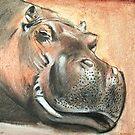 Happy Hippo by Gunter Wenzel