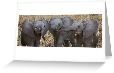 BABY ELEPHANTS - KENYA by Michael Sheridan