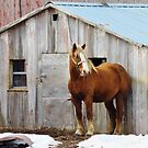 Horse & Shed  by lorilee