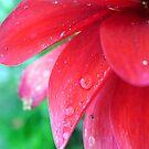 petals by nyxs