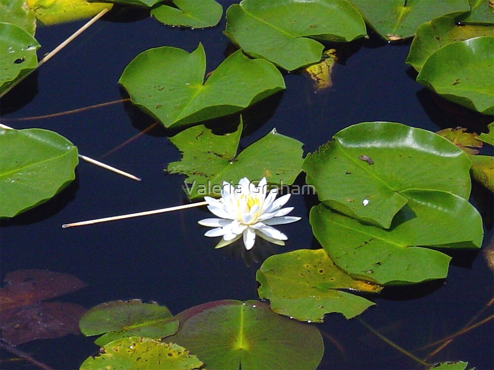 Flower on the lilly pad by Valeria Lee