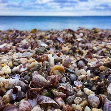 Tiny shells on a beach by KWhaleBone
