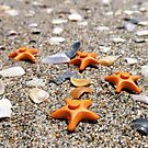 Sea Stars by bricksailboat