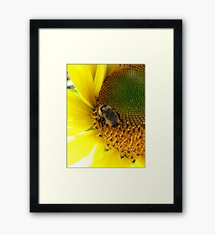 Bee Heaven Framed Print