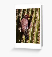Ladder-Backed Woodpecker Greeting Card