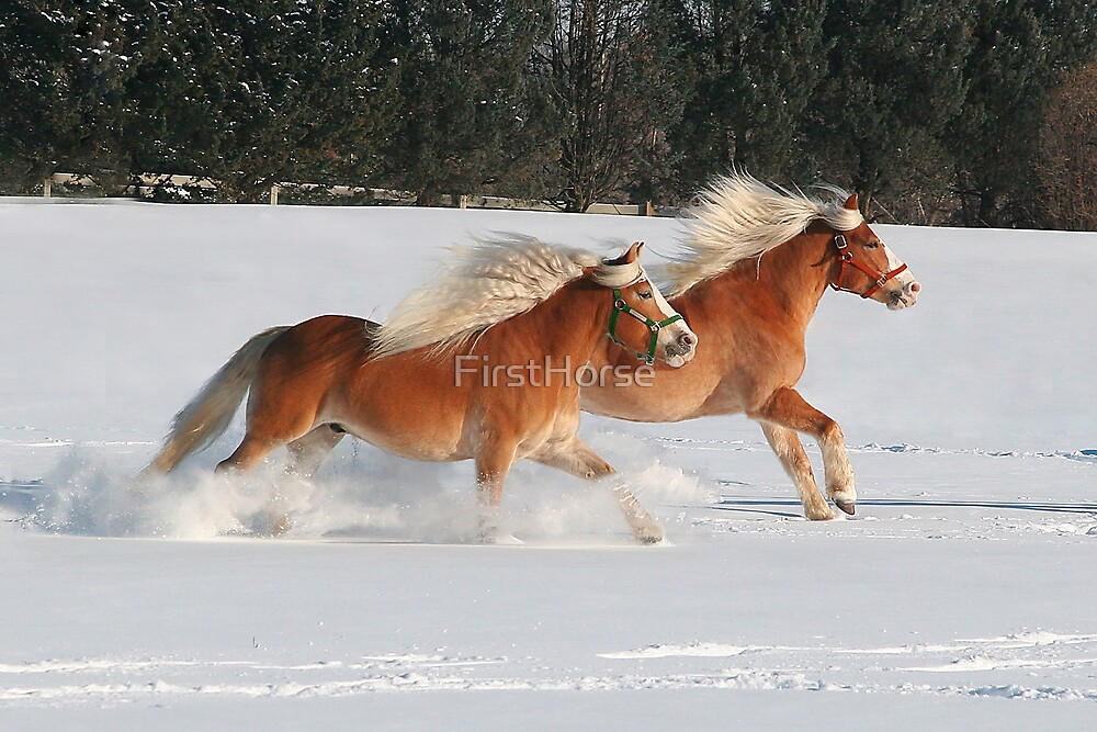 Winter Freedom by FirstHorse