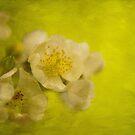 My Sweet Wild Rose by Lois  Bryan