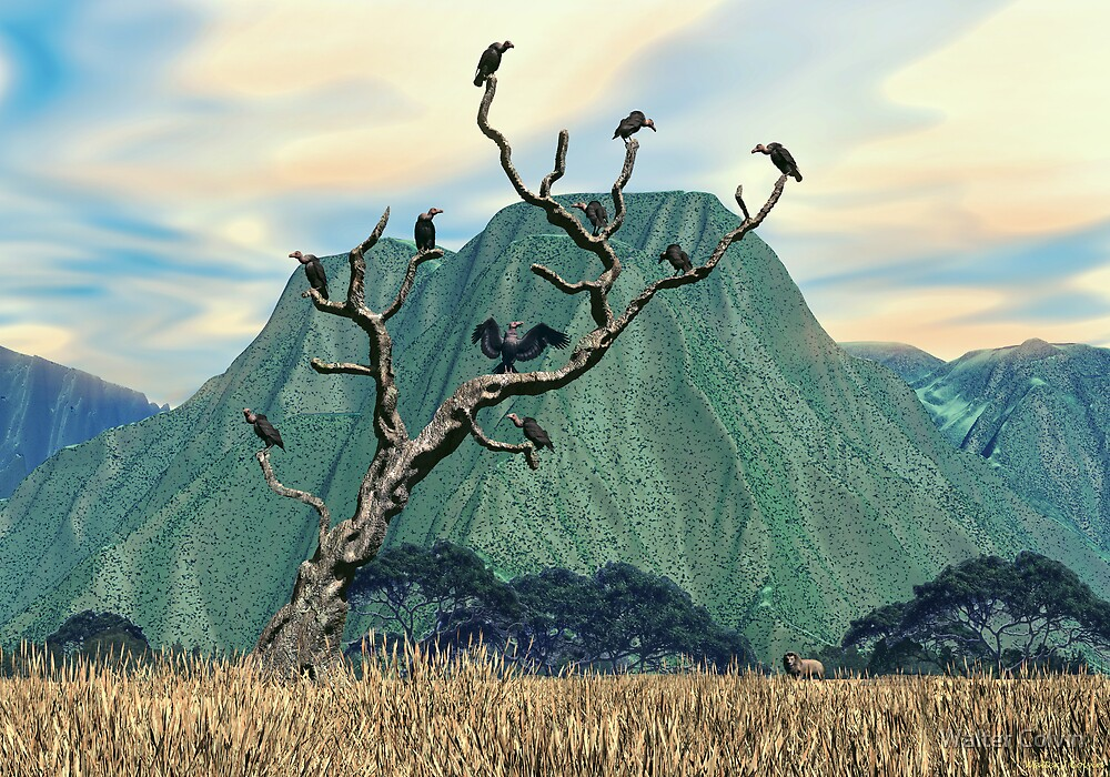 Vultures Roost by Walter Colvin