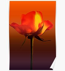 Abstract Rose Poster