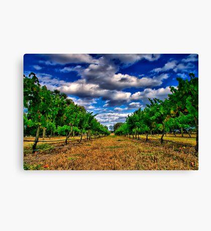 """Between The Vines"" Canvas Print"
