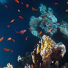 Colorful And Beautiful Sealife by hurmerinta