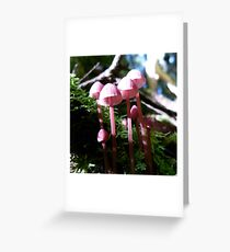 April Forest Pinks Greeting Card