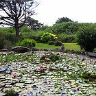 Lily Pond at Yachats Inn...Yachats, Oregon by Diane Arndt