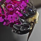 Bee-utiful by Karen Checca