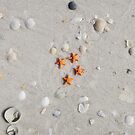 Sea Stars & Shells by bricksailboat