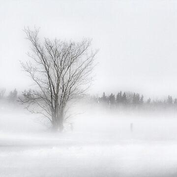 Winter Storm by tenia115