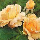 Petals and Folds by jmgreenartworks
