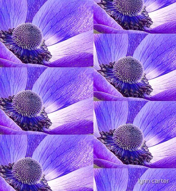 Anemone by lynn carter