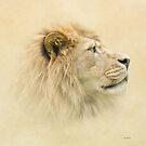 Lion portrait II by peaky40