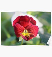 Annuals Flower Poster
