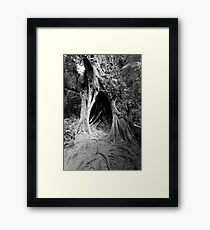 Magic Tree in the Forest Framed Print