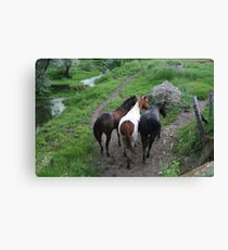 back ends Canvas Print