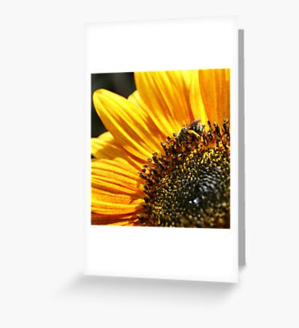 The Sunflower and The Bee Greeting Card
