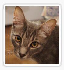 Ozzy le chaton Sticker