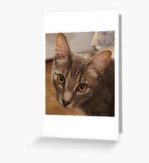 Ozzy le chaton Carte de vœux