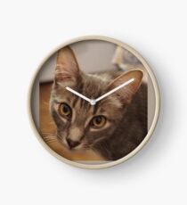 Ozzy the kitten Clock