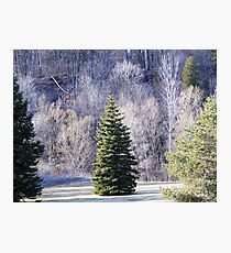 Ready for Christmas. Photographic Print