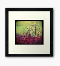 Bush by the Water ttv Framed Print