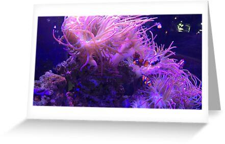 Clownfish by Cataracty