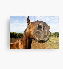 Inquisitive horse Metal Print